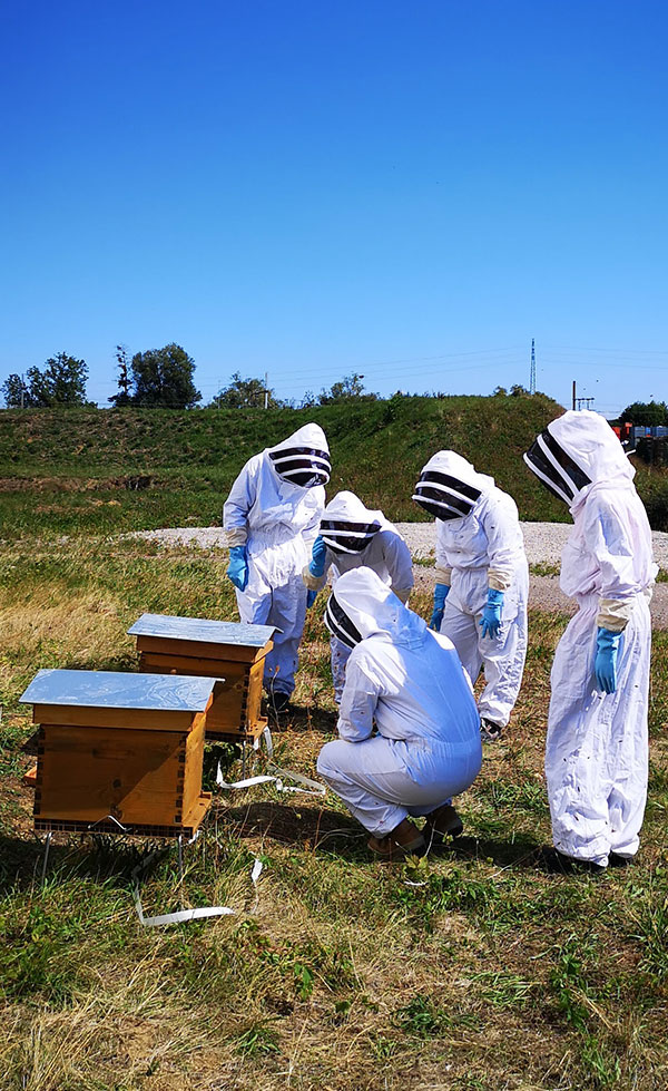 ateliers ruches apiculture
